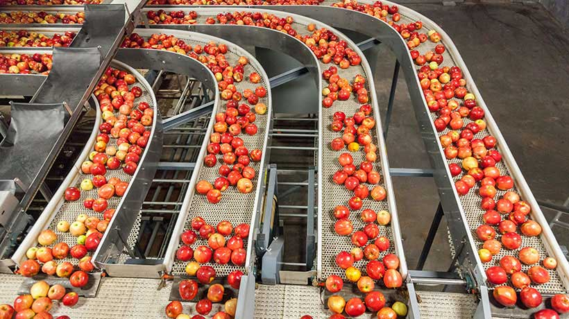 AI AOI System Ensures Quality of Fruits and Vegetables