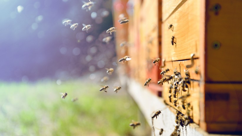 Tracking Healthy Bee Hive Populations with the Latest in Machine Vision Technology